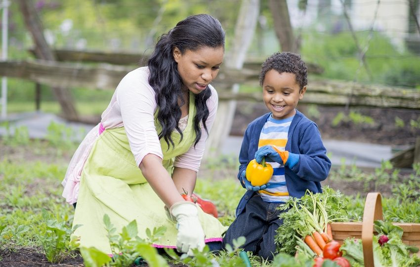 A mother and her son are gardening together. (Growing a vegetable garden)